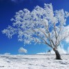 Winter-achtergronden-winter
